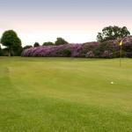 Golf_005-woodland